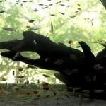 No Aquário Municipal, destacam-se as dezenas de espécies e ecossistemas presentes nos lagos ornamentais, além da vista privilegiada do Rio Piracicaba (Foto: Semae/Divulgação)