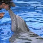 O astro de Clearwater, Winter, conquista a todos pelo seu carisma e pela lição de vida. O famoso golfinho foi parar nas telas dos cinemas, com direito à encenação com o ator mais que premiado Morgan Freeman (Foto: Clearwater Marine Aquarium/Divulgação)