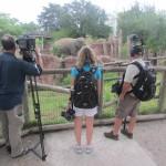 Enquanto passeávamos pelo parque, nos deparamos com uma equipe de TV local gravando uma reportagem sobre algumas espécies presentes no Busch Gardens (Foto: Eduardo Oliveira)