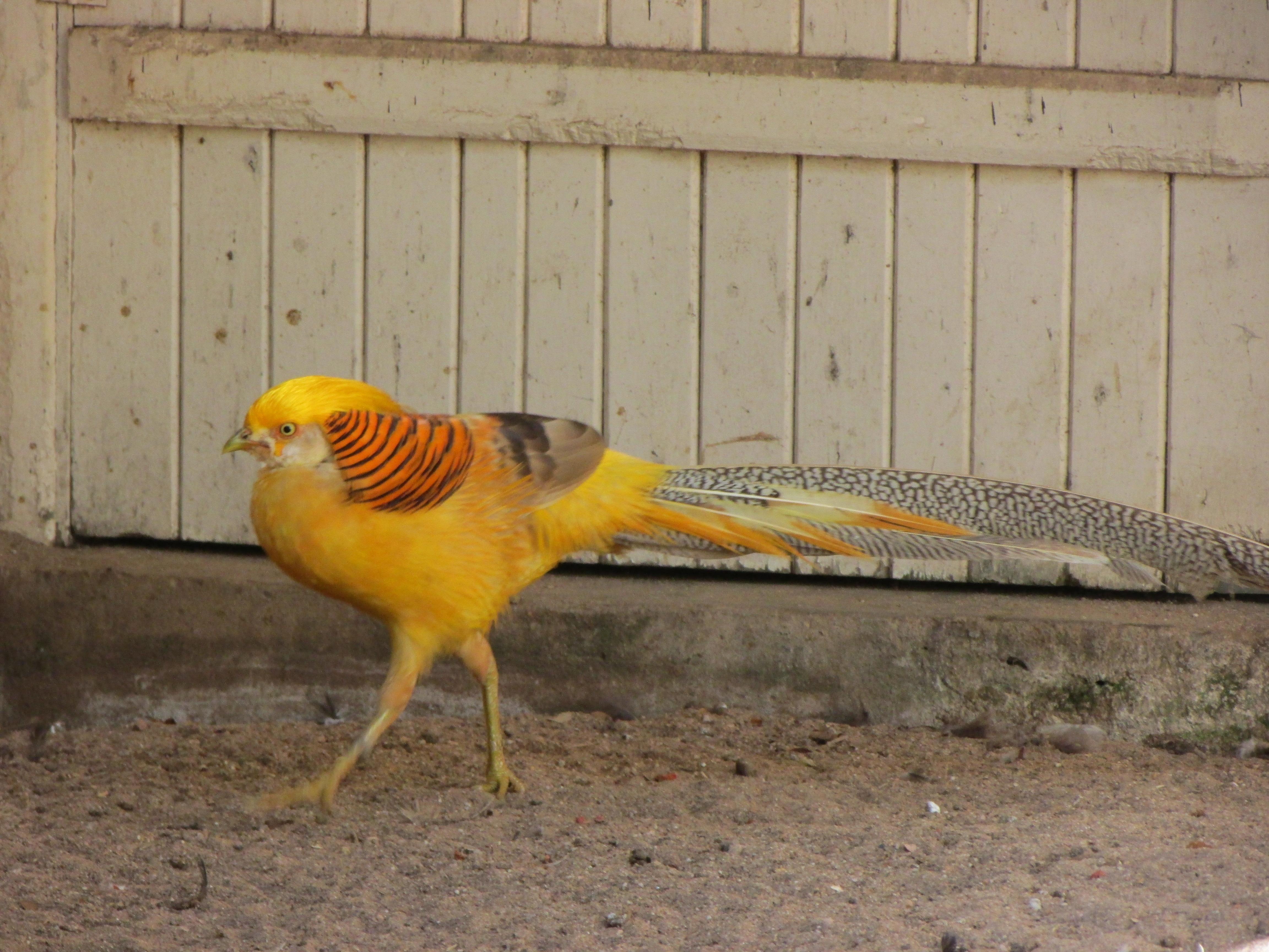 Zooparque de Itatiba: O paraíso das aves (e dos mamíferos, répteis, anfíbios...)