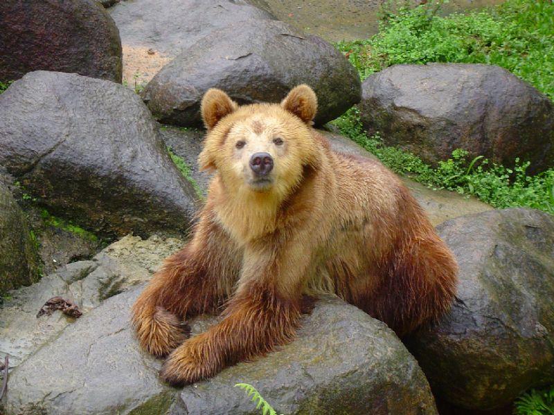 Urso-pardo no Zoo Pomerode, um dos maiores zoológicos do país, que abriga mais de 1.300 animais de 220 espécies diferentes (Foto: Divulgação/Zoo Pomerode)