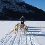 Os visitantes também podem desfrutar de passeios com trenós puxados por cães ou cavalos; outras atividades que são bastante praticadas durante os meses frios são a patinação no gelo e o curling, esporte que é paixão no Canadá (Foto: Banff/Divulgação)