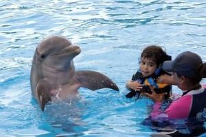 Nadando com golfinhos (Foto: Divulgação/Dolphin Discovery)