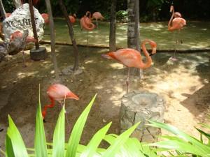 Há muitos animais espalhados pelos diversos ambientes do Xcaret (Foto: Eduardo Oliveira)