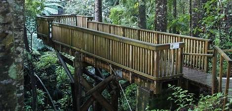 Waipoua, a floresta mais famosa da Nova Zelândia