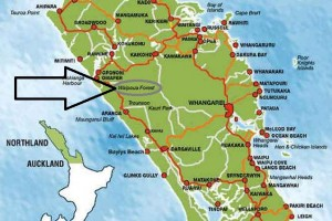Waipoua Forest fica na Ilha Norte da Nova Zelândia, entre Dargaville e Omapere (Ilustração: Doubtless Bay Online)