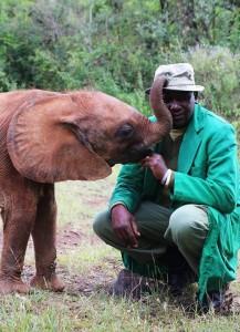 Profissionais se revezam nos cuidados com os animais. De acordo com dados fornecidos pela própria David Sheldrick Wildlife, mais de 160 elefantes órfãos já foram reabilitados pela fundação (Foto: David Sheldrick Wildlife/Divulgação)