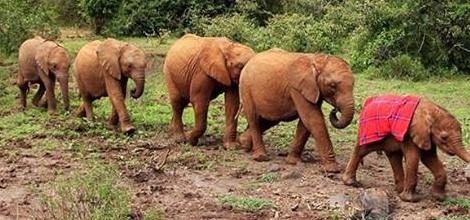 Turismo solidário: em Nairóbi, no Quênia, visite animais órfãos reabilitados