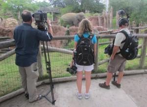 Encontramos uma equipe de TV local por lá, gravando os elefantes (Foto: Eduardo Oliveira)