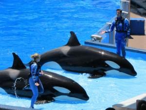 O show de acrobacias das baleias é imperdível! (Foto: Eduardo Oliveira)