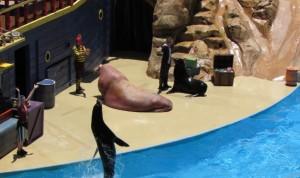Adoramos esse show! É o Clyde & Seamore Take Pirate Island, que é apresentado no Sea Lion & Otter Theather. É um espetáculo de comédia com divertidos leões marinhos, pequeninas lontras e uma gigantesca morsa, que interagem com piratas bem trapalhões. Dá pra dar boas risadas (Foto: Eduardo Oliveira)