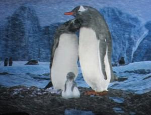 Um filminho bem bonitinho (estrelando pinguins, claro) é exibido na fila da atração (Foto: Eduardo Oliveira)