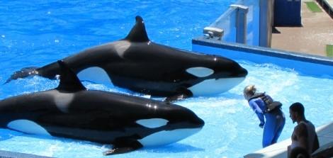 Especial Parques em Orlando: dicas para curtir o Sea World